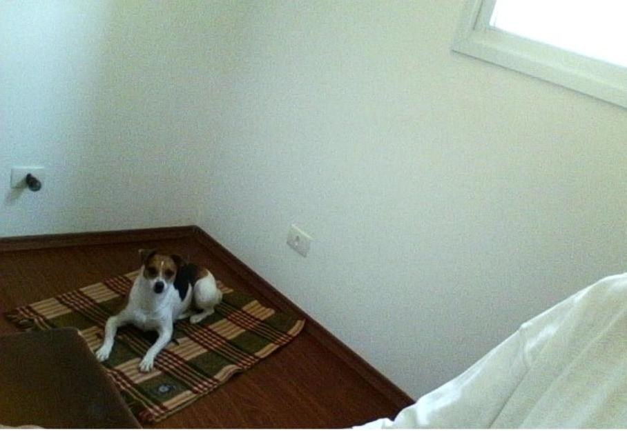 Procurando Para Minha Cachorrinha Porto-72680