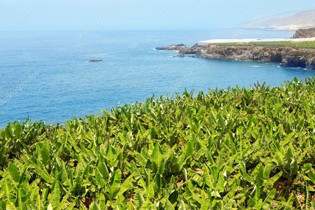 Encontrar Pares Grátis No Canary Islands-97888